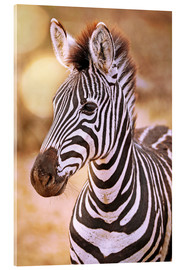 Verre acrylique  Young Zebra, South Africa - wiw