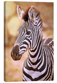 Tableau sur toile  Young Zebra, South Africa - wiw