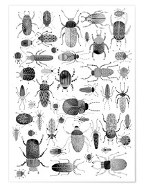 Nic Squirrell - Ink Beetles and Bugs Art