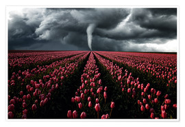 Poster Tornado and tulip field