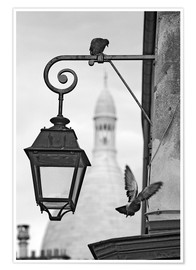 Montmartre pigeons with Sacre Coeur