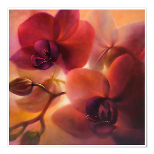 Poster orchids