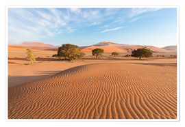 Poster  Morning mist over sand dunes and Acacia trees at Sossusvlei, Namibia - Fabio Lamanna