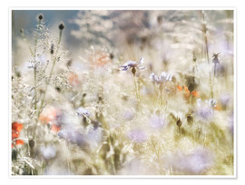 Poster Summer meadow in the morning