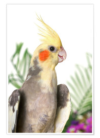 Poster  Gray cockatiel with flowers