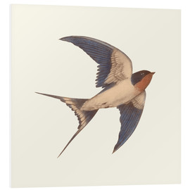 Tableau en PVC  Swallow Grange - Terry Fan