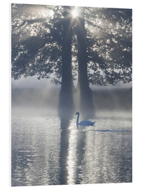 Tableau en PVC  Swan on misty lake - Alex Saberi