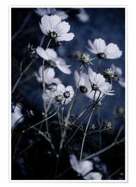 Poster Fleurs sauvages 10