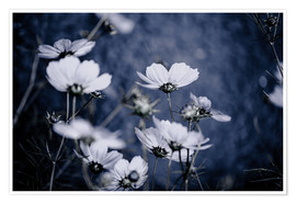 Poster Fleurs sauvages 11