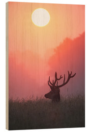 Bois  A male deer Stag at sunset - Alex Saberi