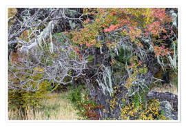 Poster  Magellanic forest in autumn colors, Patagonia, Argentina - Circumnavigation
