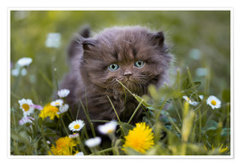 Poster kitten on a meadow in summer