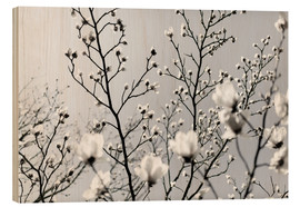 Mareike Böhmer Photography - White Blossoms 1
