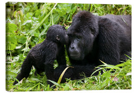 Toile  Uganda, Bwindi Impenetrable National Park, Infant Mountain Gorilla (Gorilla gorilla beringei) leans