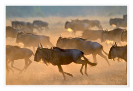 Poster  Wildebeests during the great migration, Serengeti - age fotostock