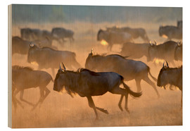 Bois  Wildebeests during the great migration, Serengeti - age fotostock