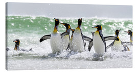 Tableau sur toile  King Penguin (Aptenodytes patagonicus) on the Falkand Islands in the South Atlantic. Group of pengui - Cubo Images