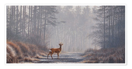 Poster  Roe deer in forest