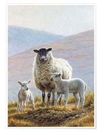Poster  Three sheep in hills