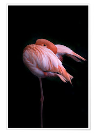 Poster  Flamant rose lissant ses plumes - Westend61