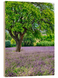Bois  Europe,France,Provence,Lone Tree in Lavender Field - Terry Eggers