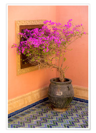 Poster  North Africa, Morocco, Marrakech. Bougainvillea glabra in purple container next to ocra colored wall - Emily M. Wilson