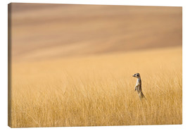 Tableau sur toile  Hoarusib Valley, Namibia. Africa. A Meerkat stands tall in the prarie grass. - Janet Muir