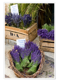 Poster  Bunches of cut lavender - Brenda Tharp