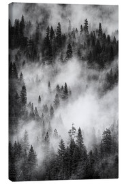 Toile  Black and white pine forests - Judith Zimmerman