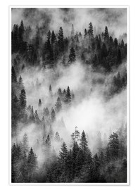 Poster  Black and white pine forests - Judith Zimmerman