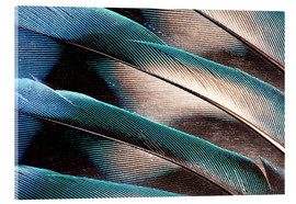 Verre acrylique  Agaponid tail feathers - Darrell Gulin