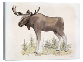 Tableau sur toile  Wilderness Collection Moose - Beth Grove