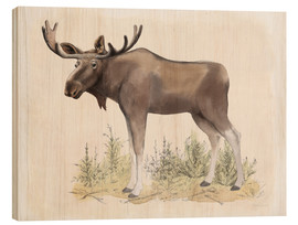 Beth Grove - Wilderness Collection Moose