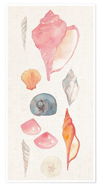 Poster Coquillages I