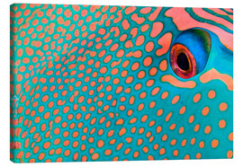 Toile  Extreme close-up of the pattern on a bicolor parrotfish, Indonesia.