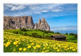 Poster  Spring on the Alpe di Siusi in South Tyrol - Achim Thomae