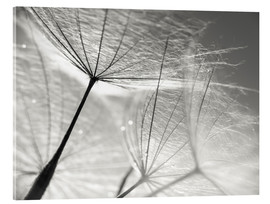Julia Delgado - Dandelion Seeds Black and White