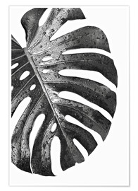 Poster Monstera noir 01