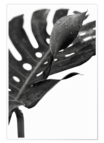 Poster Monstera noir 02